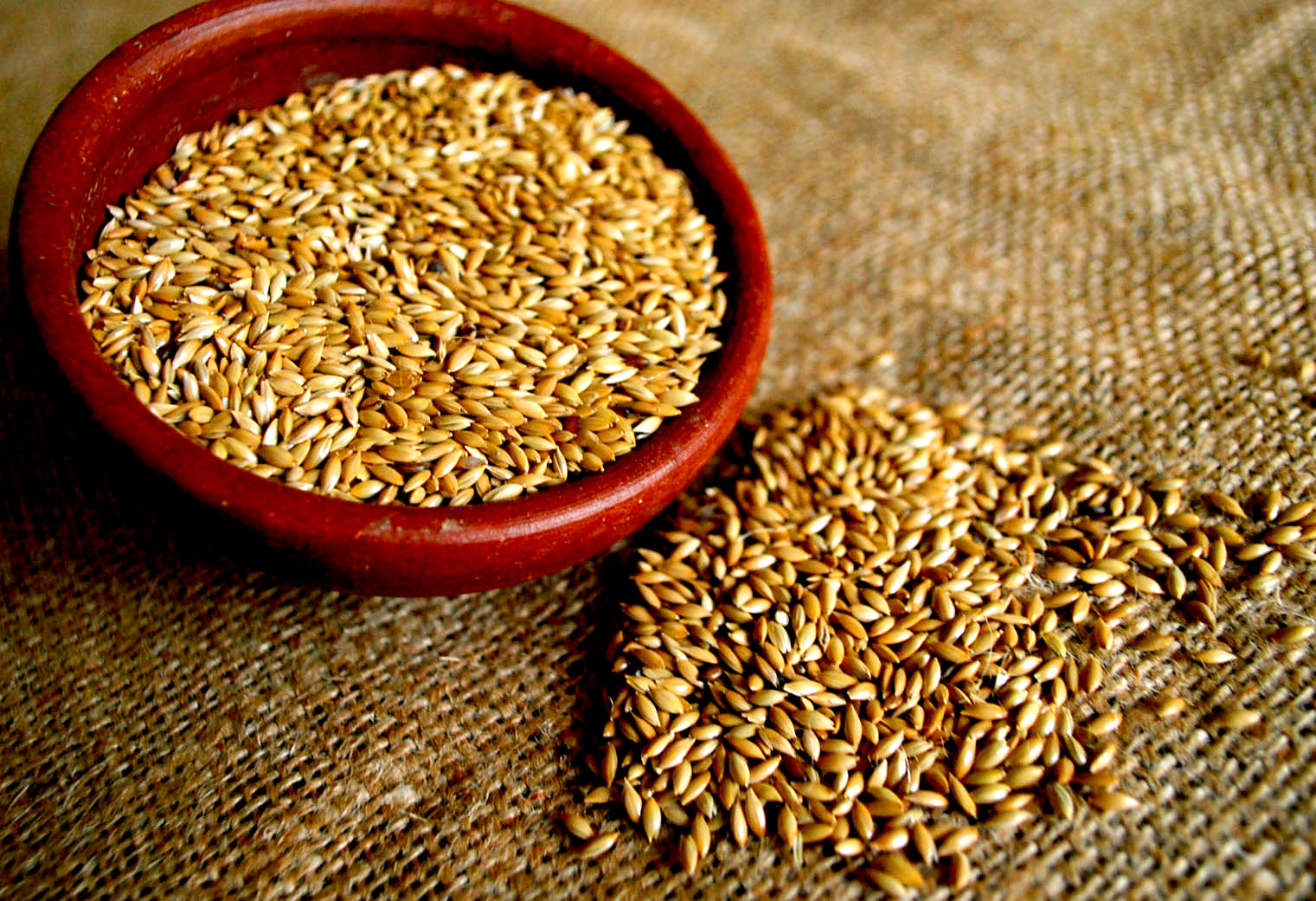 Canary seed powder: benefits and contraindications