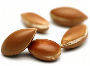 Argan Cream: Properties and Benefits