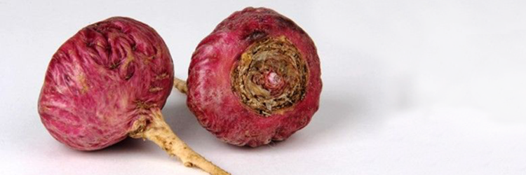 Red Maca: Prostate, Bone Regeneration, Properties and Contradictions