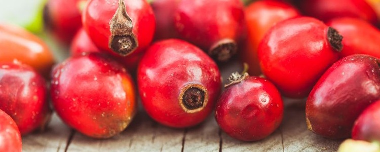 Rosehip Oil: Properties