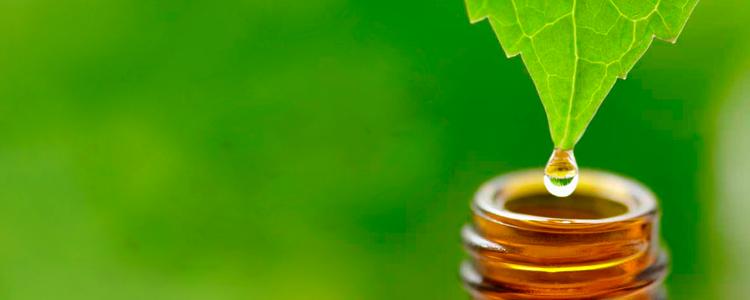Articulos for Aceites esenciales usos
