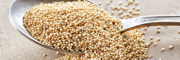 Amaranth: Food of the Future