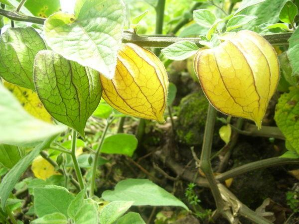 exportacion flor ecuador: